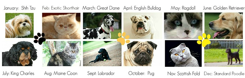breed of month vJan