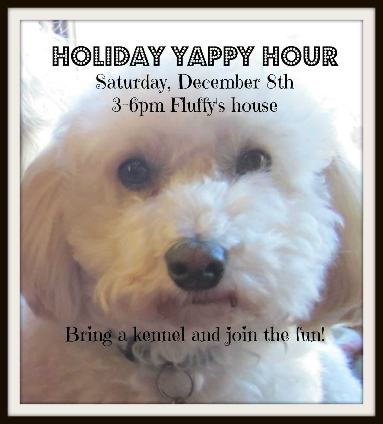 holiday yappy hour