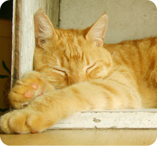 JUNE_napping-cat